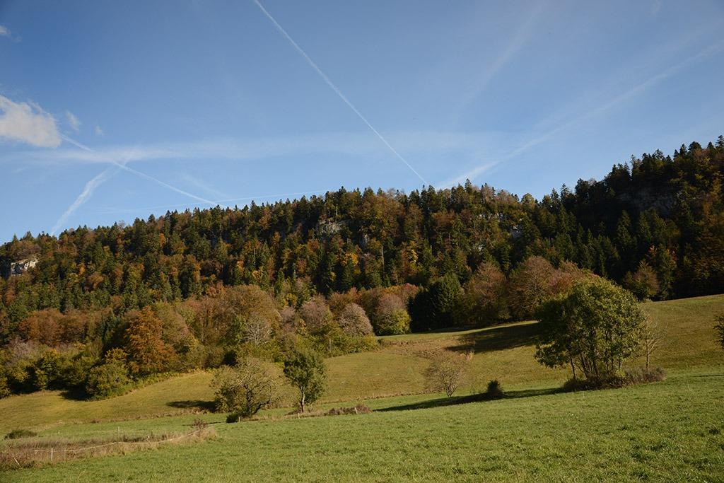 Forêt Echallon
