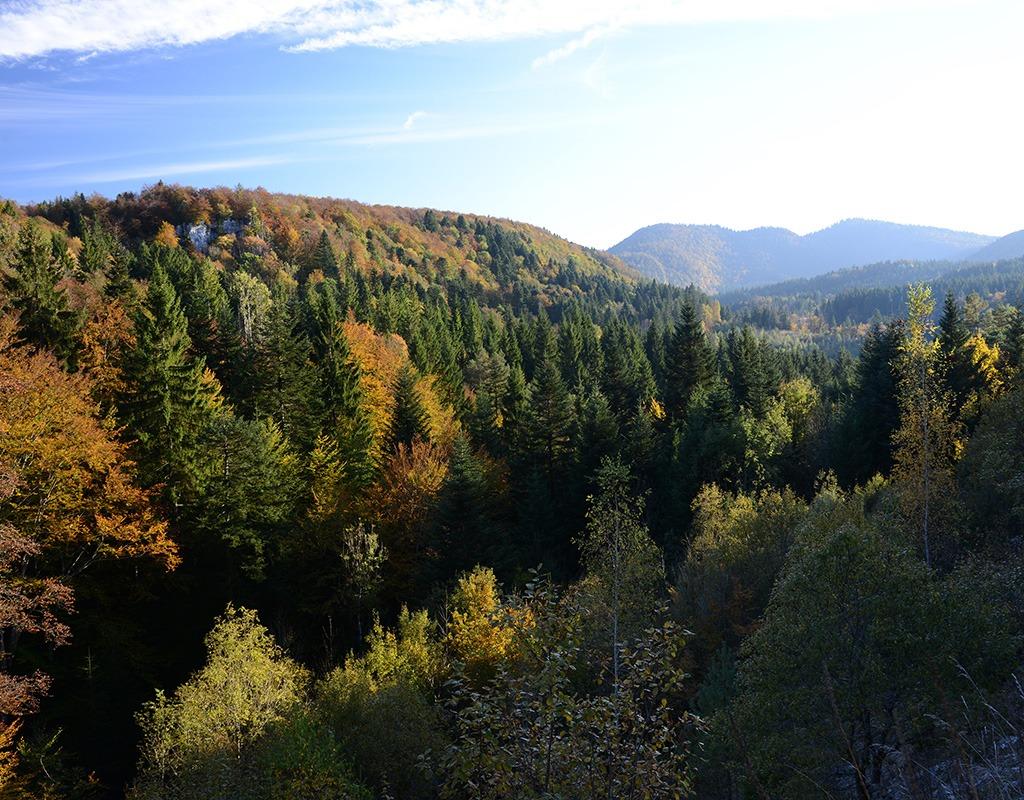 Forêt Arbent Automne